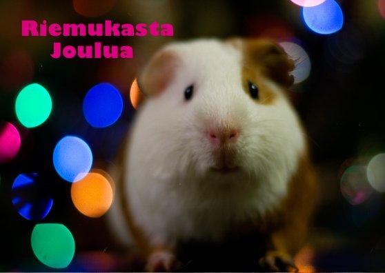 Travel Postcard - Hamsteri vauhdissa - (cc) Kitkatherine